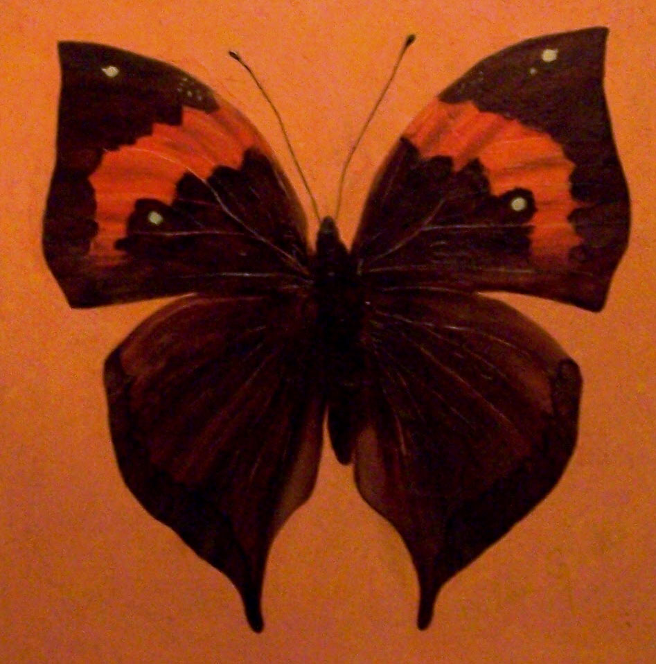 Realistic butterfly paintings - photo#55