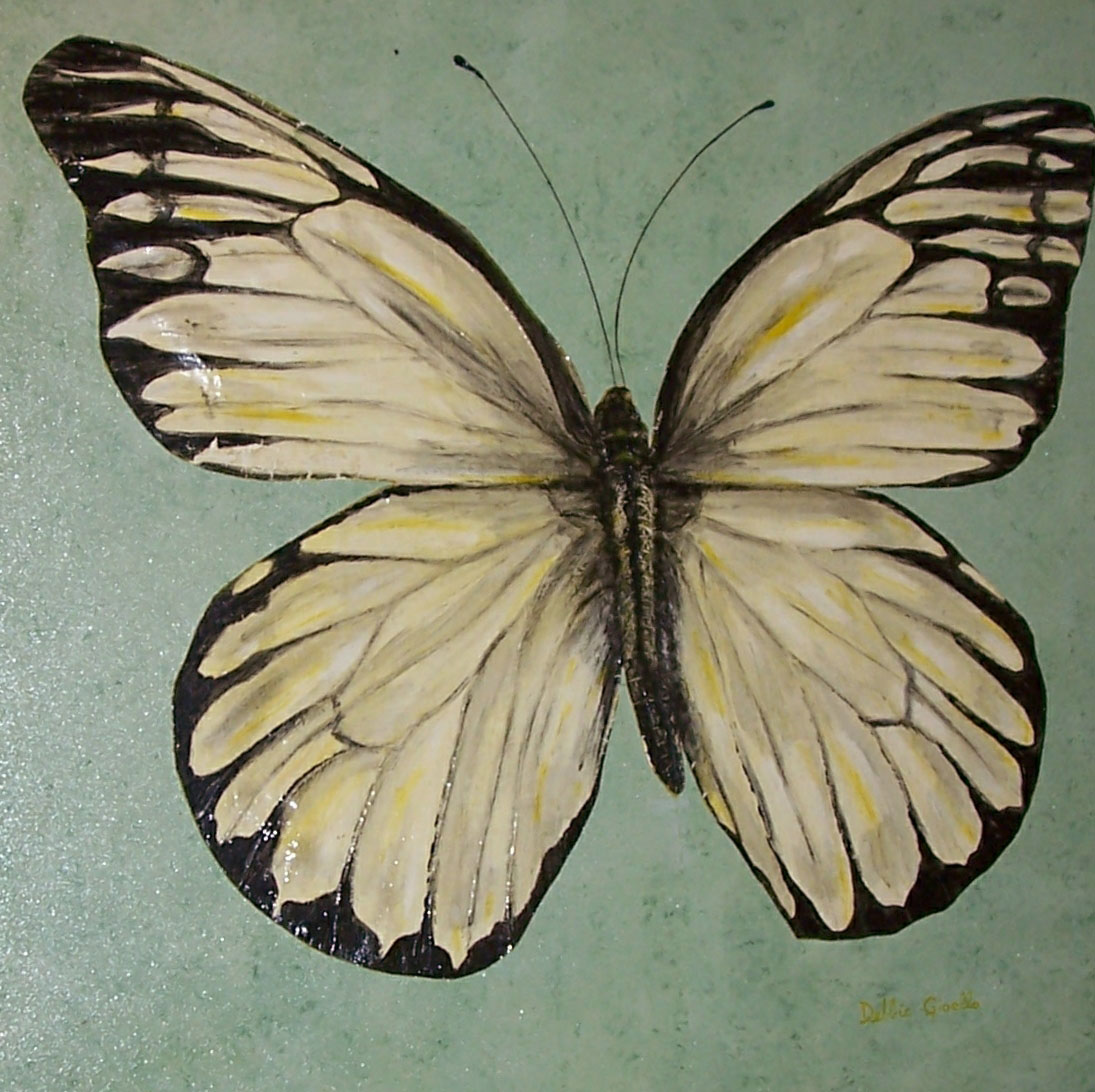 Realistic butterfly paintings - photo#54
