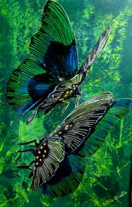 "Lycopteryx Appllonia Butterfly (18"" x 22"")"