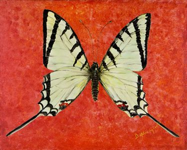 "Papilio Protesilaus Butterfly (30"" x 36"")"