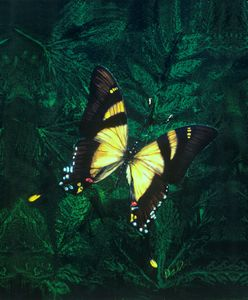 Realistic butterfly paintings - photo#39