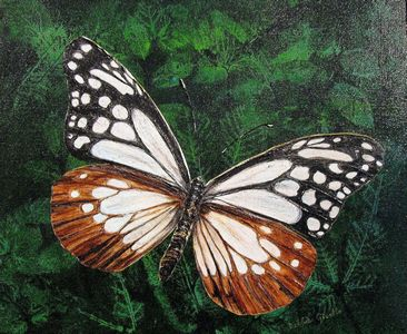 Realistic butterfly paintings - photo#43