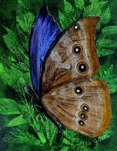 "Morpho Didius Butterfly - Profile (16"" x 20"")"